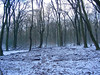 2017 0109 01 (Henja) Tags: labyrint drie boshuis speulderbos dansende bomen beuken sneeuw labirinth henja kerkhof wood forest walking meditation loop meditatie natuur nature natuurgebied