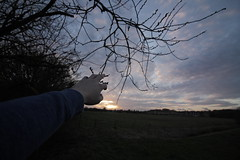 Reach (rossdillon1) Tags: reach sunset nature inspire tree hand grap grasp opportunity canon 1018mm