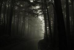 Ulvsblakk (Samkale Bellacrux) Tags: forest bosque winter invierno darkness oscuro oscuridad misterious mistery hidden oculto mist fog niebla mountain montaña snow trees