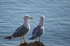 Duo on the coast
