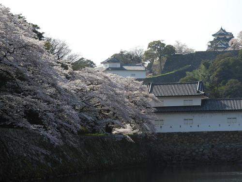 Hikone Castle / 彦根城