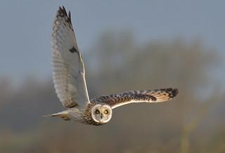 Owl O'Clock
