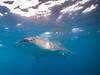 Whale shark II (altsaint) Tags: 714mm gf1 islamujeres mexico panasonic whaleshark shark underwater