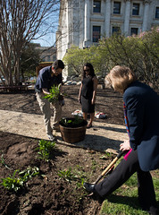 20170405-AMS-LSC-2004 (USDAgov) Tags: usda departmentofagriculture usdepartmentofagriculture peoplesgarden nationalmall washington dc planting seed sprout tools soil garden transplant plant align spring coolweather