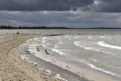 17_04_fruehling_2943 (kako_foto) Tags: ostern dümmer wind windig lembruch niedersachsen