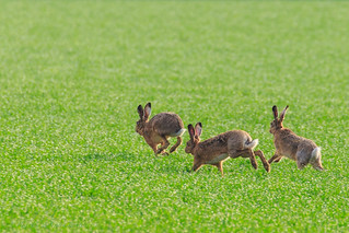 Springtime Bunnies!