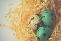 Happy Easter! (Elena L-v) Tags: eggs easter macro quail