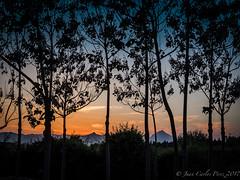 Atardecer (Juakifoto) Tags: arbol atardecer comunidadvalenciana españa landscape miramar paisaje paisajenatural spain valencia tree