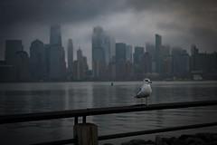 NYC tour guide (Jfoose03) Tags: manhattan nyc cityscape newyorkcity libertystatepark newjersey