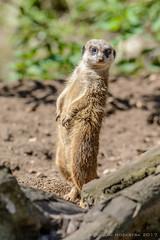 Yo, whats up (JnHkstr) Tags: ouwehandsdierenpark zoo dierentuin rhenen