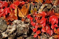 Herbst (KGrajewski) Tags: laub herbst holz bltter