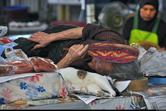 Old chinese woman and market cat, Chao Phrom Market, Ayutthaya. (Olivier Simard Photographie) Tags: life cat thailand chat asia market stall thaïlande meat rest oldwoman asie fatigue marché chatte butchery ayutthaya streetshot candidshot sieste boucherie viande éventail étal vieillefemme âgée thaimarket scènedevie phranakhonsiayutthaya scénederue valleyofthechaophrayariver