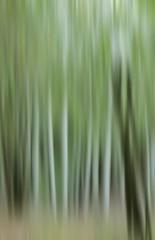 ICM - Intentional Camera Movement (ALQVIMIA) Tags: naturaleza verde arboles bosque icm abstracta intentionalcameramovement