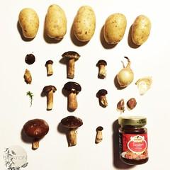 Herbst 2014: Pilze sammeln.