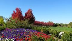 Landscaping on Top of Art Hill (Bill Steffen) Tags: stlouis forestpark arthill