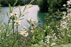 1172 (cristianachivarria) Tags: lake flower nature landscape croatia unesco sunnyday worldheritage waterscape plitvice naturalpark projectweather