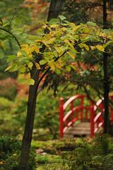Japanse-tuin-Clingendael (Don Pedro de Carrion de los Condes !) Tags: japan garden japanesegarden herfst brug herfstkleuren donpedro landgoed kleurcontrast japansetuin rodebrug landgoedclingendael gemeentedenhaag