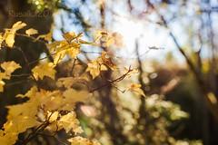 Autumn smile (Matilda Diamant) Tags: autumn fall nature norway october seasons norwegian nordic scandinavia scandinavian rusalka