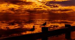 Majestic Beauty (JDS Fine Art & Fashion Photography) Tags: sunset nature water beauty birds landscape golden photographer florida pigeons dreamy inspirational topf150 topf100 soe elegance oceanscape