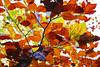 306: Feuillage d'automne