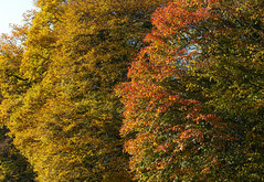 Herbst-Farben (Werner-Q) Tags: autumn trees leaves herbst wald bltter bume baum laubwald