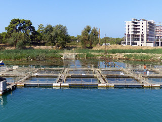 Manavgat Fish Farming