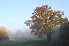 Mist (rogermarcel) Tags: sun mist tree sunrise landscape paysage tones arbre brume rogermarcel
