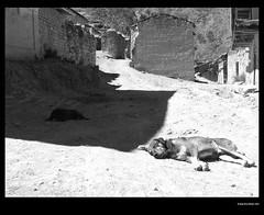 Watchdogs (idoazul) Tags: dog animals mobile lima iphone blanckandwhite peru rupac