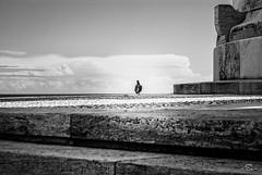 Loneliness #1 (m0n0n0ke_hime) Tags: sky blackandwhite bw cloud monochrome mono nikon italia nuvole loneliness pigeon cielo piccione biancoenero ancona solitudine passetto monumentoaicaduti