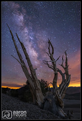 Speared Milk (Aaron M Photo) Tags: california old sunset white mountains tree pine clouds forest way dead milk ancient nikon desert grove whitemountains nationalforest astrophotography mojave astronomy alive sierras sierranevada eastern milky bishop mojavedesert bristlecone milkyway easternsierras patriarch bristleconepine inyo ancientbristlecone inyonationalforest bristleconepineforest inyocounty patriarchgrove bcone nikond800