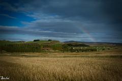 Kjartansstadir rainbow (stolsis) Tags: horses landscape iceland rainbow breeding southiceland icelandichorses horsesforsale kjartansstadir kjartansstaðir