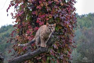 I love The Fall Season ♥