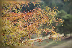 Autumn Splender (I) (gtncats) Tags: park autumn trees color fall canon70d photographyforrecreation
