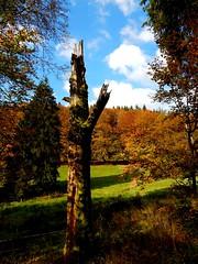 Vesser Valley / Vessertal 01  (Explore) (Caledoniafan) Tags: autumn oktober green fall nature forest germany landscape deutschland thringen nikon october herbst natur thuringia coolpix grn landschaft wald 2014 nikoncoolpix thringerwald thuringianforest l820 caledoniafan nikoncoolpixl820