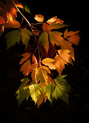 Changing (arbyreed) Tags: orange tree green fall leaves yellow gold fallcolors provoriver utahcountyutah arbyreed