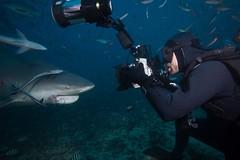 Fiji_Diving_5194