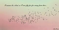 I wanna be...  (Adri Photo) Tags: from sky bird love animal canon happy fly hungary away can here be far wanna farfar iwanna iwannabe a lovephotography i so simasg adriphoto