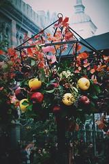 Mistery Among Us!! (Mariam_arsenashvili) Tags: apple festival georgia photography nikon soft colours autum tbilisi flowera d3100 vscocam colourdull