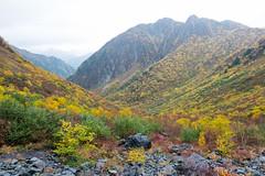 (GenJapan1986) Tags: travel autumn mountain japan landscape     nagano  25mm 2014    nikond600 zf2 distagont225