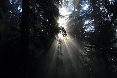 Filtered Sunshine (Shutterbug Fotos) Tags: autumn light sun sunlight color colour fall nature beautiful beauty sunshine shine scenic rays washingtonstate beams sunbeams northcascades mountainloophighway highway20 filteredsunlight filteredsunshine