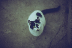 My boy (Just A Stray Cat) Tags: portrait cats film field analog cat 35mm canon 50mm nikon dof bokeh kitty kittens s scratches contax gato ambient 5d mm manual nikkor 50 35 猫 depth ai 貓 f12 ainikkor50mmf12s