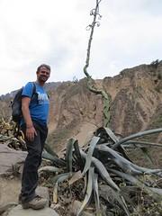 Colca Canyon-40
