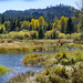 Autumn Colors on the Upper Truckee River