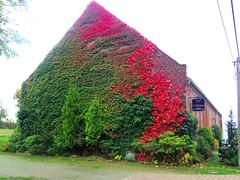 2014-10-20 Kremmen 15 (dks-spezial) Tags: brandenburg oberhavel scheunenviertel kremmen