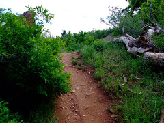 "Red Rocks forest path • <a style=""font-size:0.8em;"" href=""http://www.flickr.com/photos/34843984@N07/15541783751/"" target=""_blank"">View on Flickr</a>"