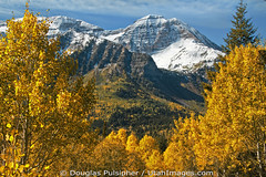 Mount Timpangos (Utah Images - Douglas Pulsipher) Tags: travel autumn mountain mountains color tourism beautiful forest utah ut colorful mt fallcolors scenic rocky sunny canyon cliffs boulders craggy alpine valley evergreens summit aspens geology wilderness aspen crags range forests pinetrees rugged mts conifers steep spruces timp alpineloop highaltitude conifer glacial massif geological crag scenicbyway wasatchmountains mounttimpanogos forested sprucetrees alpinescenicloop cottonwoodsleaves destinationscenery pines steep