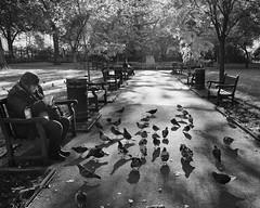 Bird Man (donvucl) Tags: bw london birds shadows figure tavistocksquare donvucl fujix100s