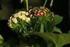 * (najla sohaibani) Tags: flowers sun white flower green afternoon purple شمس ورد ورده ظل goodafternoon بنفسجي اخضر مساء ابيض مساءالخير مساءالورد