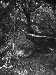 barranc d'algendar (the incredible how (intermitten.t)) Tags: espaa gorge menorca baleares minorca balearicislands illesbalears barranc 25081 barrancdalgendar 20141004