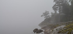Foggy shoreline (Storkholm Photography) Tags: autumn trees lake reflection fall nature water rock fog landscape 50mm grey nikon europe sweden hill shoreline foggy scandinavia mystic 50mmf14 mälaren d610 mariefred södermanland